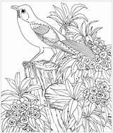 Coloriage Dessin Difficile Imprimer Colorier Oiseau Oiseaux Coloriages Dure Animaux Realiste Adulte Paysage Magique Dessins Difficiles Fille Enfants Gratuit 4eme sketch template
