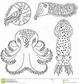 Coloring Cephalopods Cuttlefish Drawn Hand Octopus Nautilus Designlooter 1300 4kb Vector sketch template