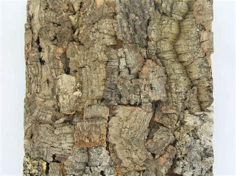 cork wall tiles jelinek cork get corking taking a closer look