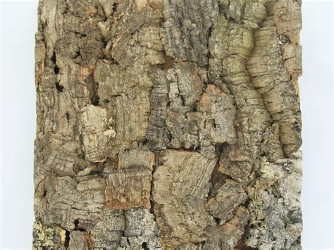 cork wall panels jelinek cork get corking taking a closer look