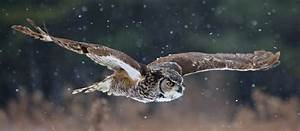 Who said that? 8 owls you might hear at night | MNN ...