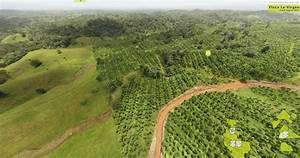 Bauminvest Mixed Reforestation In Costa Rica