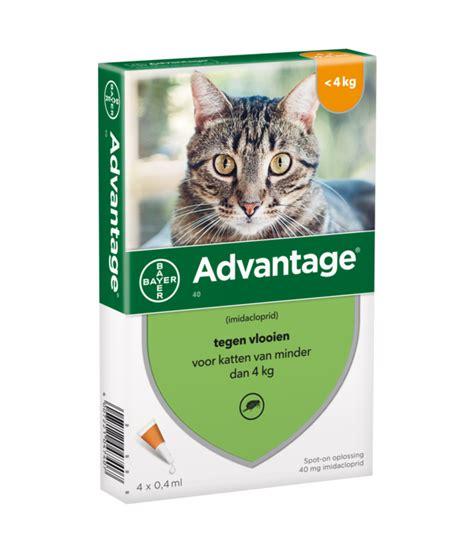 advantage katze spot  behandlung von floehen bei katzen