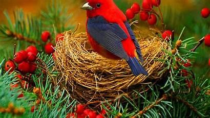Bird Birds Wallpapers Odd 1080 Lovely Desktop