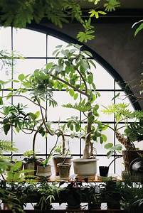 Fresh Interior Green Corners Fit For Plant Enthusiasts