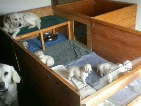 whelping box bedding 25 best ideas about whelping box on