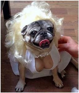 animal halloween costumes - Google Search   animal ...