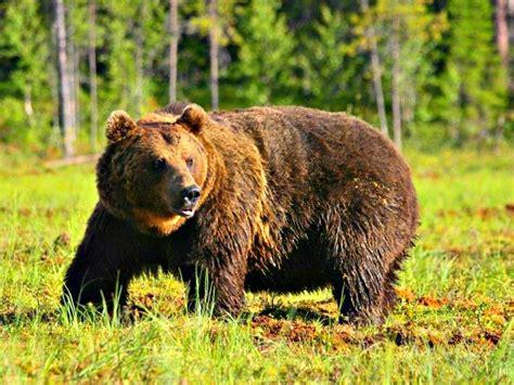 Виды медведей. фото описание. удивительный мир животных