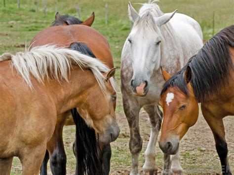types horses diseases common most pet disease animals lyme develop among four