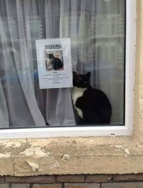 Lost Cat Meme - missing cat found near his own missing cat poster