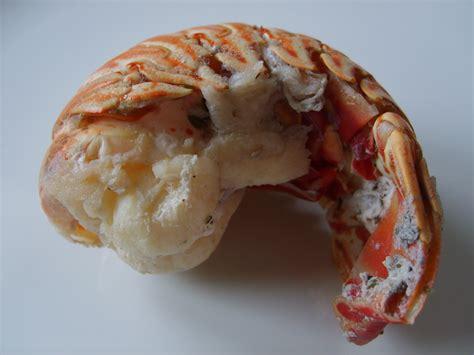 cuisiner des queues de langouste file queue de langouste jpg wikimedia commons