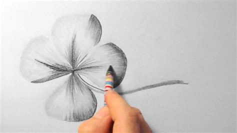 klee zeichnen im zeitraffer clover drawing  fast
