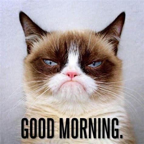 Morning Cat Meme Morning Cats Lolcats Grumpy Cat