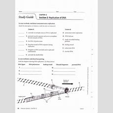 Chapter 12 Dna And Rna Worksheet Answers The Best Worksheets Image Collection  Download And