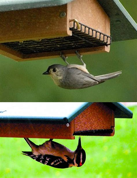 wild birds unlimited how to keep blackbirds away from