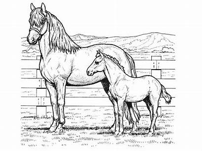 Coloring Pages Horse Printable Realistic Horses Library