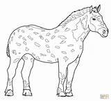 Coloring Horse Pages Horses Printable Miniature Arabian Sheets Appaloosa Draft Detailed Paint Percheron Animal Jogging Rearing Wanda Getcolorings Getdrawings Drawing sketch template