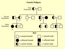 Genotype And Phenotype Chart Standard 16 Fcat Review