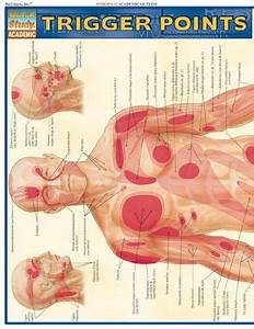 Trigger Points  Quickstudy  Academic  By Inc  Barcharts