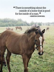 Country Quotes ... Horse And Country Quotes
