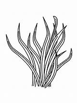 Plants Coloring Pages Plant Sea Drawing Ocean Grass Clipart Printable Drawings Coral Underwater Sheets Clip Template Library Under Cliparts Realistic sketch template