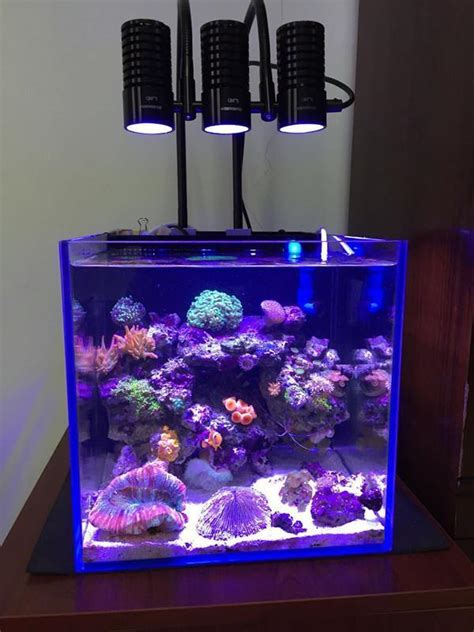 Aliexpress.com : Buy LED light marine sea tank coral SPS