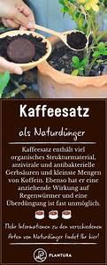 Kaffeesatz Als Dünger : naturd nger anwendung vorteile von nat rlichem d nger ~ Watch28wear.com Haus und Dekorationen