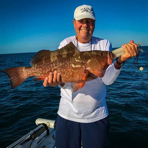grouper fishing nearshore gag offshore techniques fall