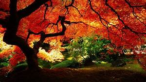Japanese Gardens Wallpapers