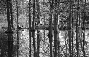 Black, And, White, Forest, Trees, Branches, Monochrome ...
