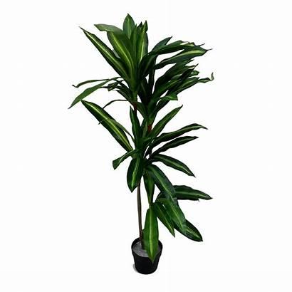 Plant Dragon Pot Plants Warehouse Accents Interior