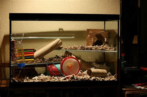aquarium cages for hamsters choose the best hamster cages hamster story