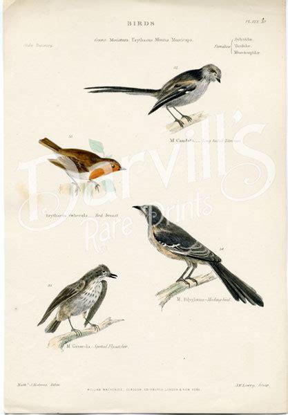 hand colored antique engravings  birds  william