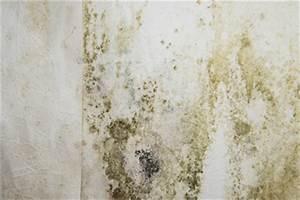 Feuchtigkeit In Der Wand : schimmelbeseitigung im haus schimmel von w nden und decken entfernen ~ Sanjose-hotels-ca.com Haus und Dekorationen