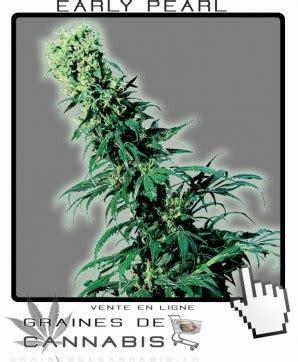 les meilleures graines de cannabis pour la du nord