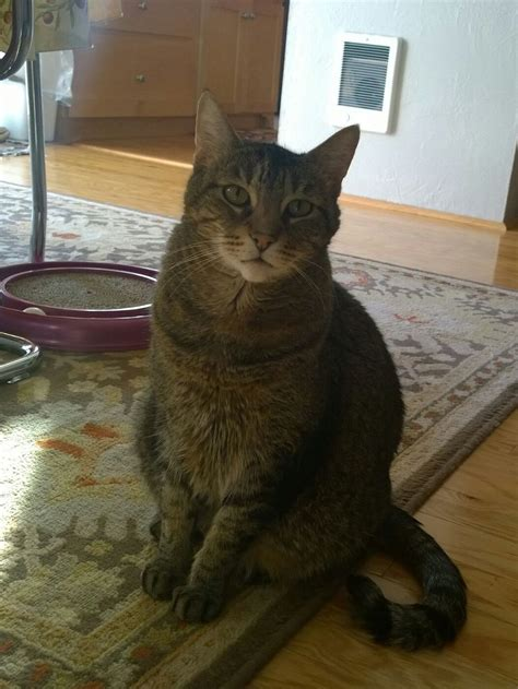 do you have to euthanize a cat with kidney failure