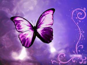 (1307) Pink Butterfly HD Wallpaper - WalOps.com