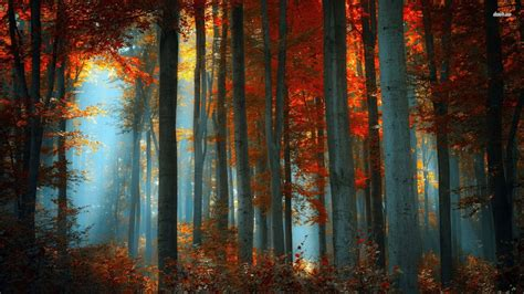 fall aesthetic desktop wallpapers top  fall