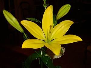Fleur De Lys Plante : images gratuites fleur p tale vert botanique flore ~ Melissatoandfro.com Idées de Décoration