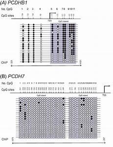 27 Pioneer Avh X4800bs Wiring Diagram