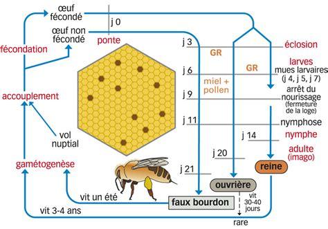 cr 233 er une 171 classe abeille