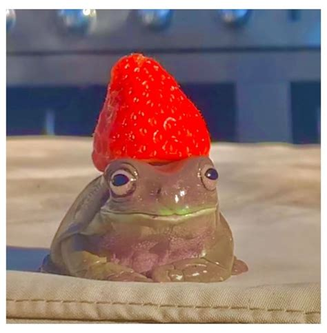 sopoophia on tiktok cottagecore aesthetic frog