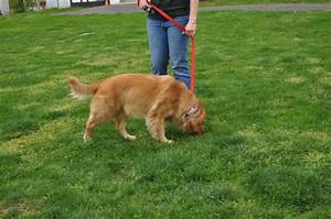 Dog peeing train your dog to pee in the yard petcarerx for How to train your dog to pee