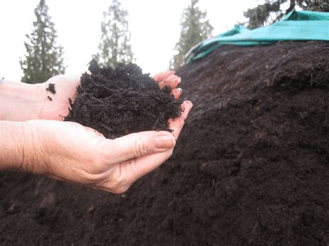 Nothing beats a freshly plunged cup of coffee to kick start your day. Coffee grounds can be used as a component of home compost piles. (Photo... | Download Scientific ...