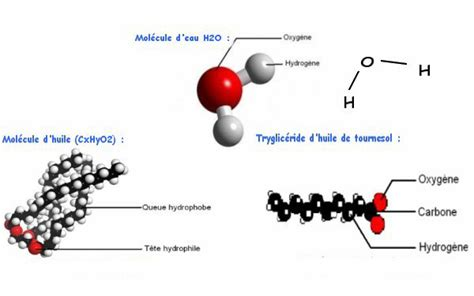 ingredient cuisine moleculaire les deux principes émulsion sphérification et l 39 alginate