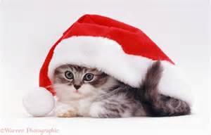 cat with santa hat kitten in a santa hat photo wp08381