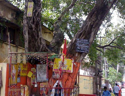 Ficus Religiosa A Neglected Hemorrhagic Remedy