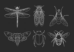 Insects Hand Drawn Illustration