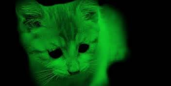 glow in the cat bizzare animals which glow in the
