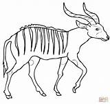 Bongo Coloring Pages Antelope African Printable Forest Drawing Supercoloring Categories sketch template